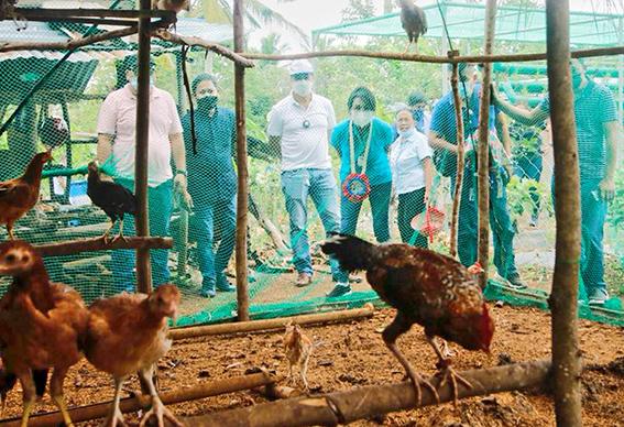 DA7: Cebu Province on its way to food sustainability